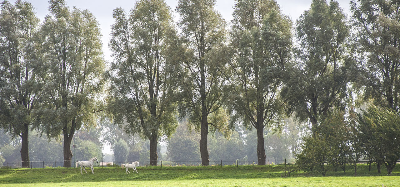 6. Duurzame stad: natuur, landschap en dierenwelzijn.